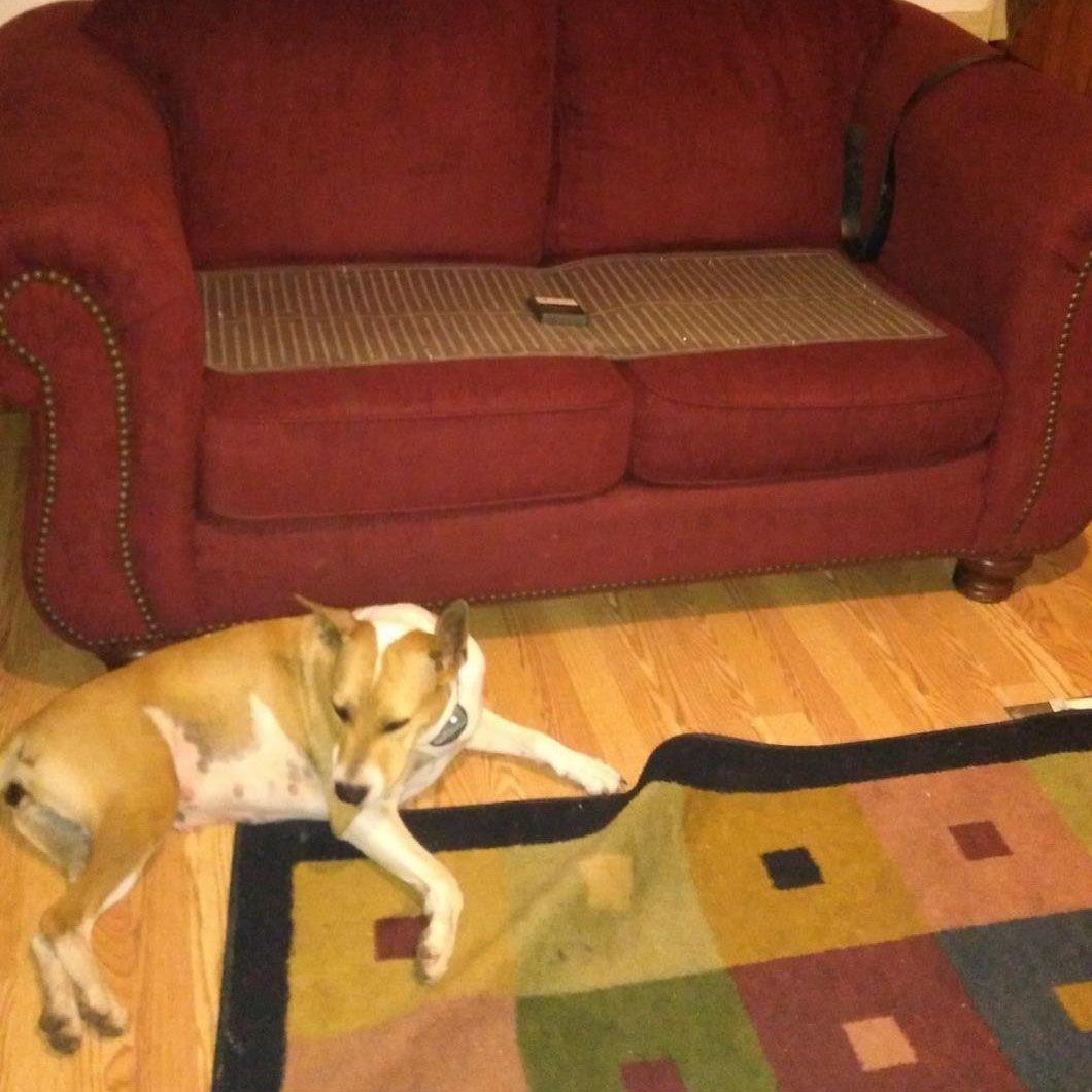 Dogs Puppies Pettraining Petproducts Pettrainingmat Pets Petlovers Cat Mat Pet Training Dog Sofa