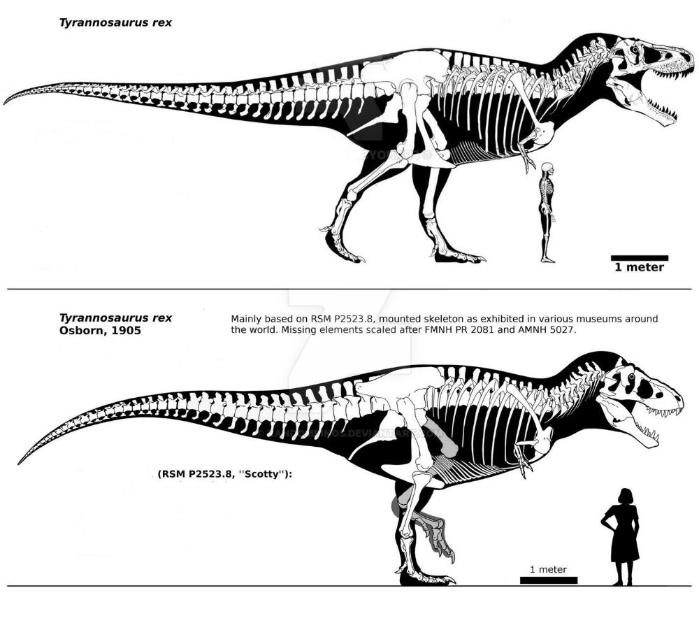 T-Rex prefera să mănânce puii altor vieţuitoare, decât să vâneze animale mari