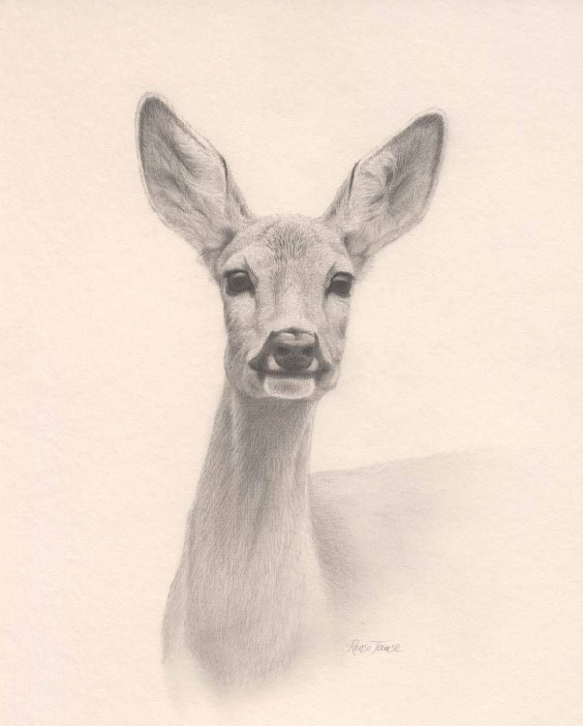 Pin by eyequake on reh | Pinterest | Roe deer, Drawings and Artsy
