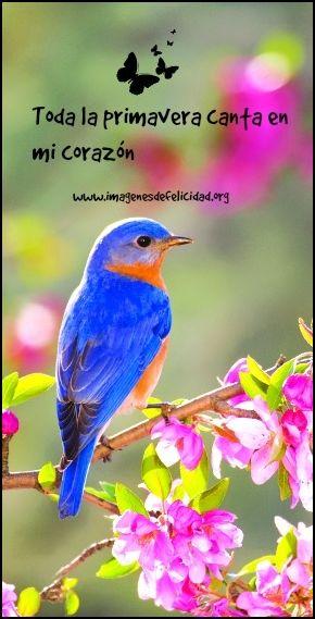 Las 61 Mejores Imágenes De Primavera Primavera Frases De