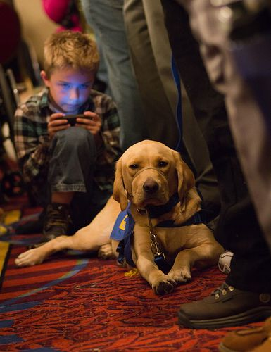 Recognizing Service Dogs Service Dogs Service Animal Dogs