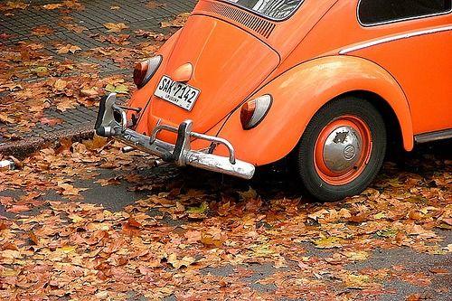 autumn orange love bug