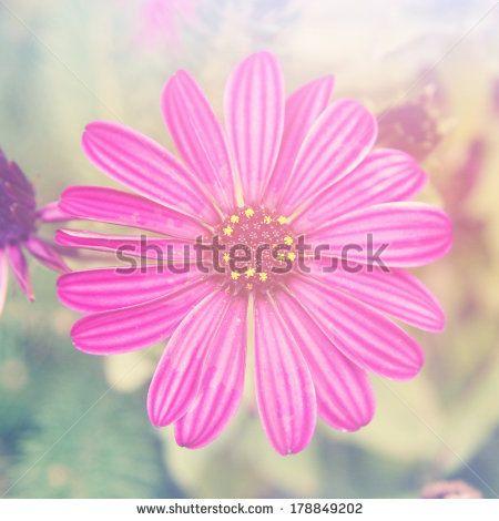 Beautiful pink flower taken closeup with instagram effect by Melissa King, via Shutterstock
