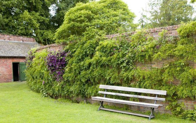 begrnnte gartenmauer kletterpflanzen ziegel sichtschutz gartenbank - Gartenbank Mit Sichtschutz