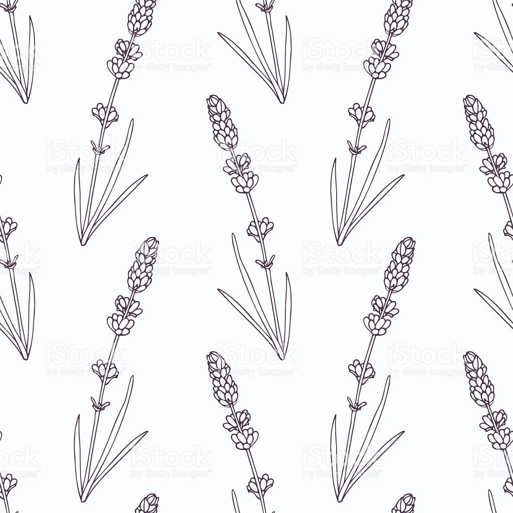 Hand Drawn Lavender Branch And Flowers Outline Seamless Pattern