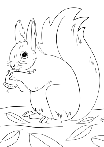 Squirrel Preparing For Winter Coloring Page Eichhornchen Illustration Herbstmotive Ausmalen