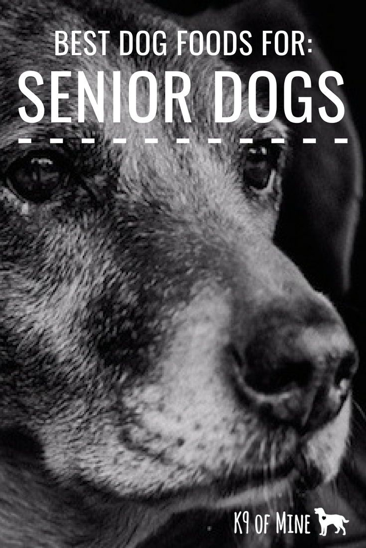 Best Dog Food For Senior Dogs Our Top Picks Best dog