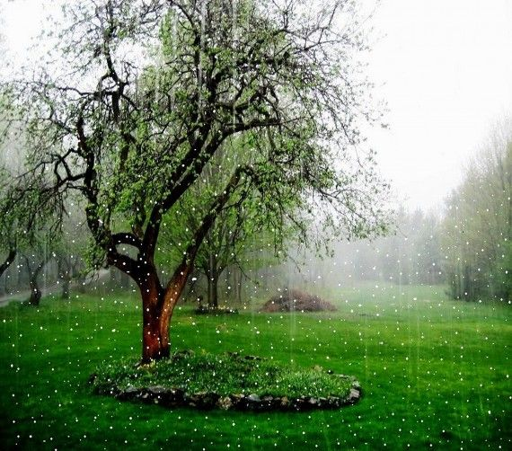 Nature Rain Rainy Day Desktop Wallpaper Hd