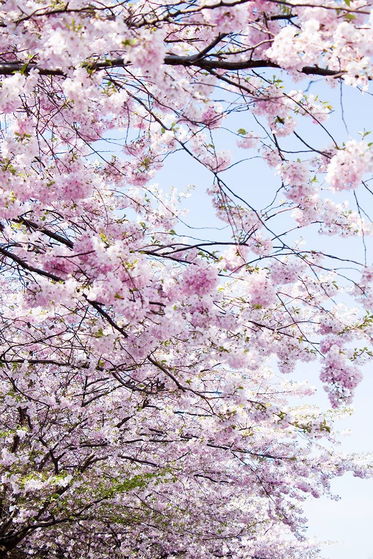 Spring In Berlin New Goals Not Your Standard Trees To Plant Blossom Love Flowers
