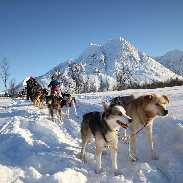 Dog sledding in the Lyngen Alps – Tour in Lyngenalps