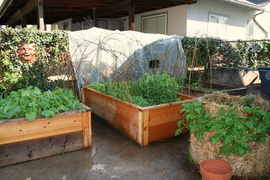 Gardening In Oklahoma Raised Garden Beds A Potato Tower