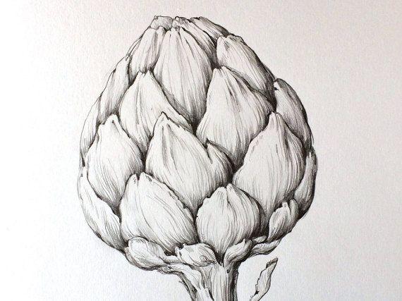 Artichoke Original Pencil Drawing Illustration Kitchen Art