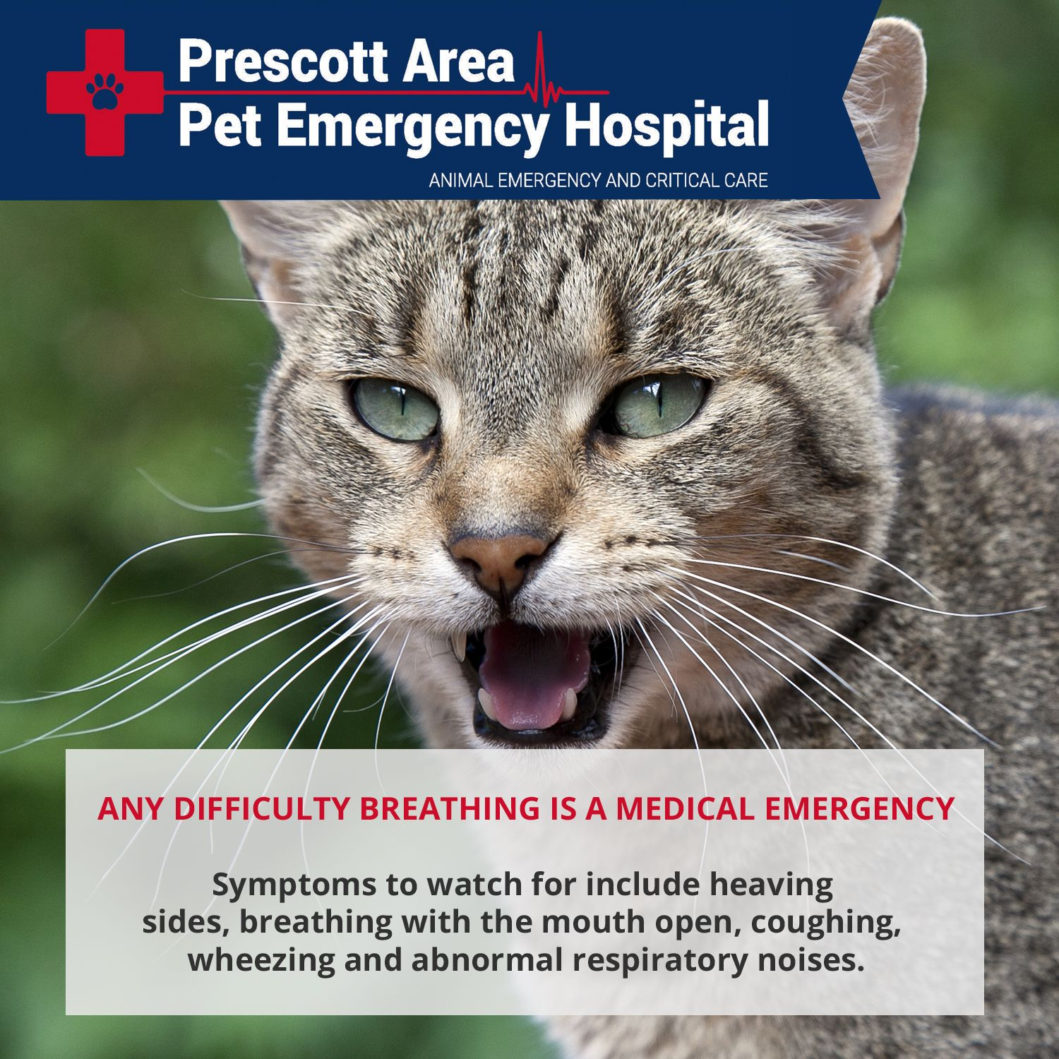 Any Difficulty Breathing Is A Medical Emergency Breathing Problems In Cats Can Be Hard To Recognize At First Bu Pet Emergency Emergency Hospital Cat Wheezing