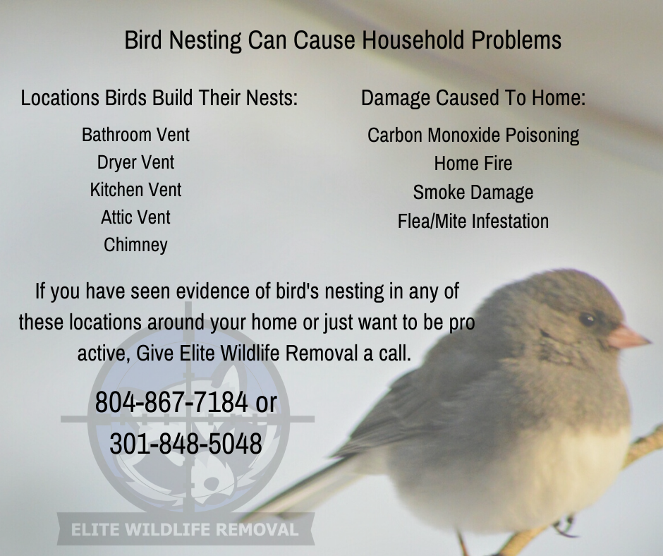 Bird Nesting Can Cause Household Problems In 2020 Smoke Damage How To Remove Wildlife