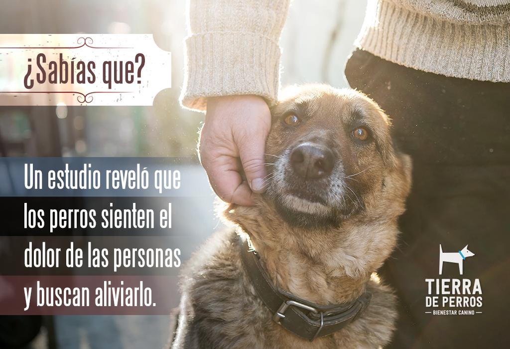 Quotes Frases Tierradeperros Guardería Canina Hotel