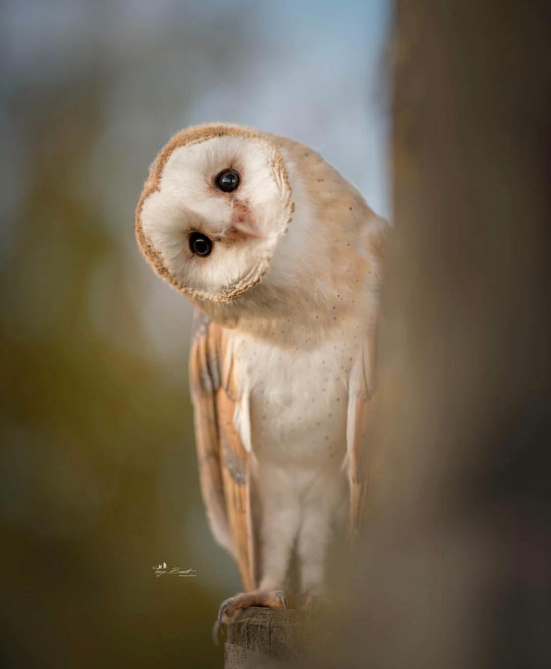 Best Bird Shots On Instagram Congrats To Tanja Brandt For