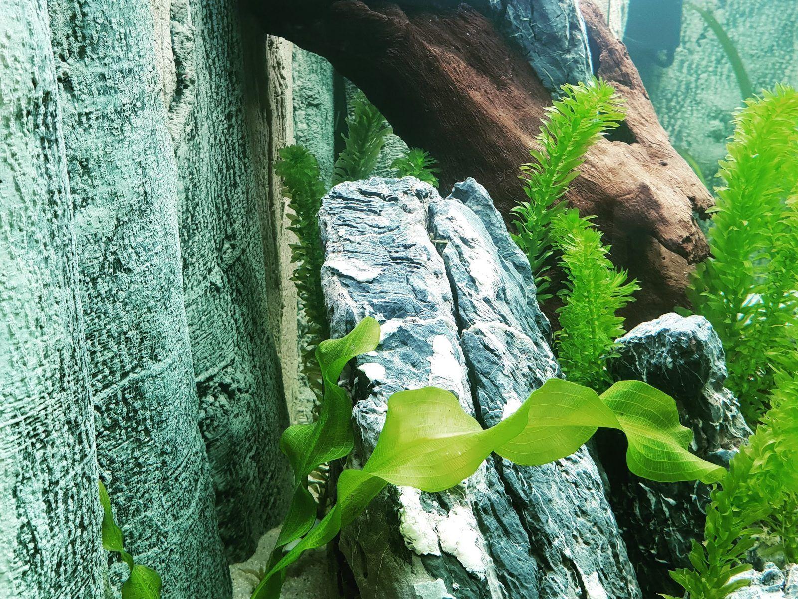 Wenn In Der Aquaristik Das Thema Ruckwand Ansteht Dann Ist Back To Nature Mit Sicherheit Teil Des Gesprachs Das Kommt Nicht Von Irgendwoh Ruckwand Back To Nature Und Amazonas