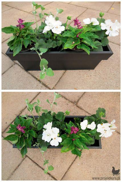 1 Pelargonia Rabatowa 2 Kocanka 3 Szalwia Balcony Plants Plants Perfect Plants