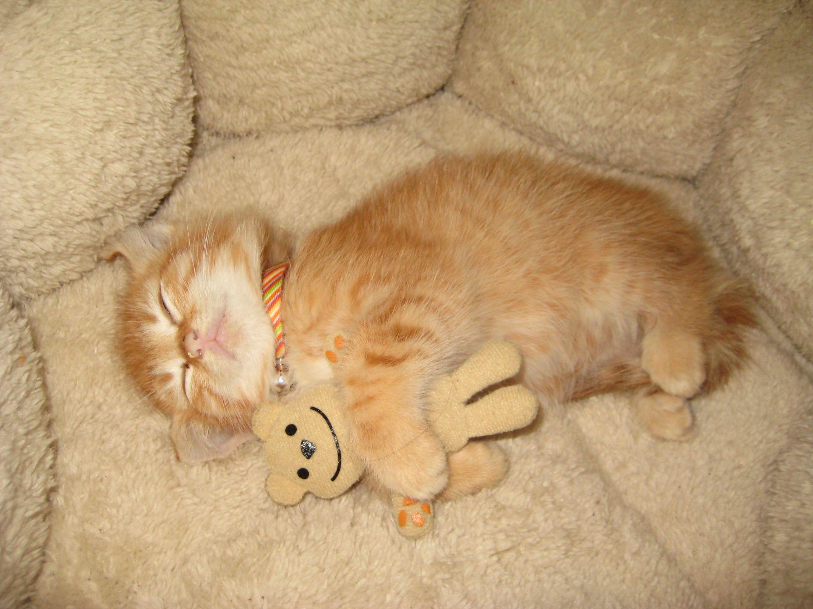 My Kitten Hugging Her Bear Imgur Baby Animals Cute Animal Pictures Kittens