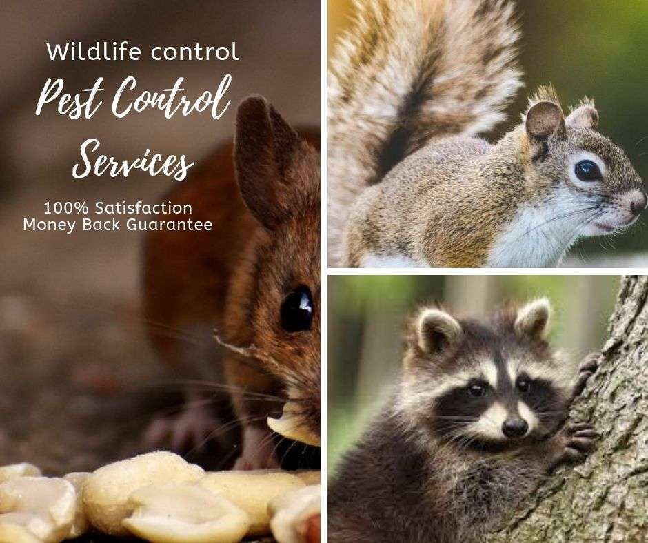 Pestrgone Wildlife Control is one of Toronto's's