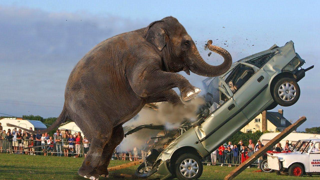 Hewan Liar vs Mobil Hewan, Binatang, Mobil