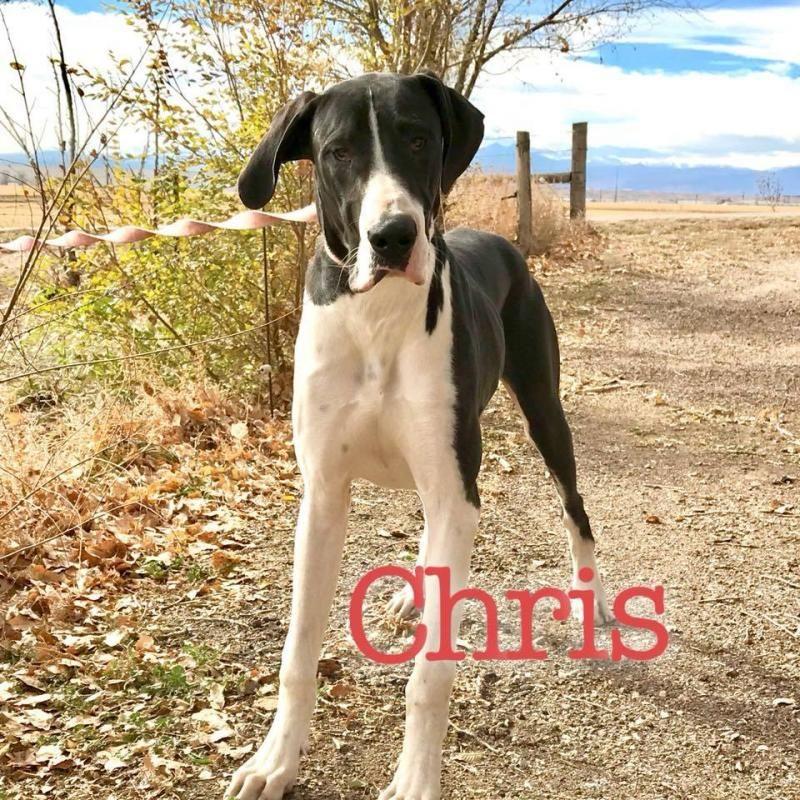 Adopt Chris On Adoption Cute Animals Pets