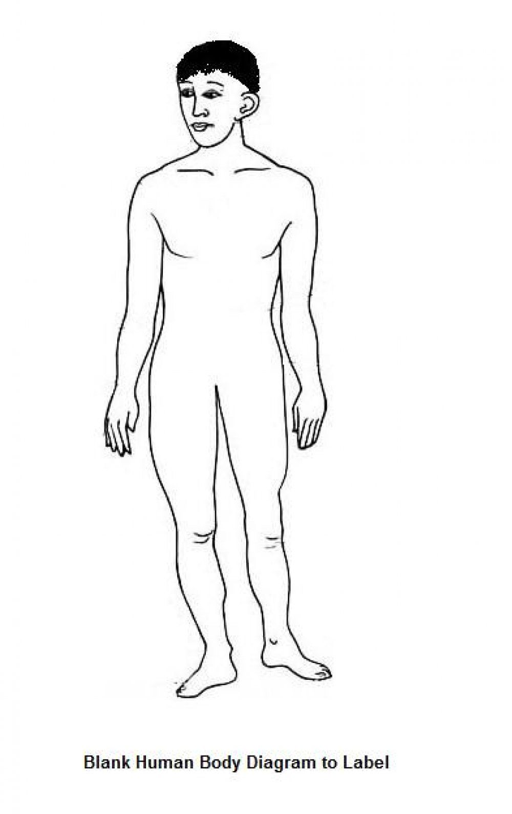 blank human body diagram   blank human body diagram bodies heres a blank  human body diagram