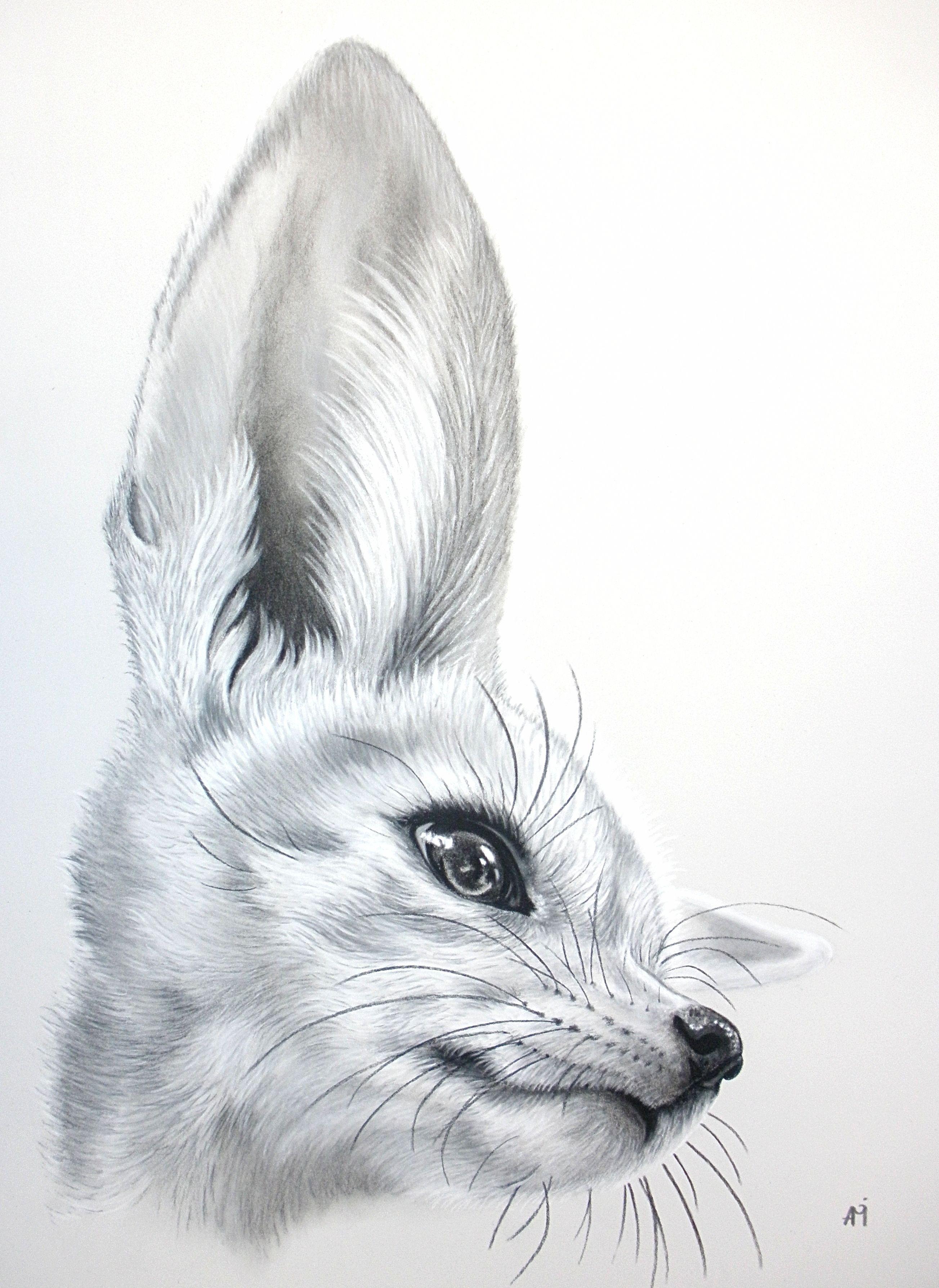 Fennec Fox Drawing Audrey Migeotte Jpg 2607 3576 Dibujos De