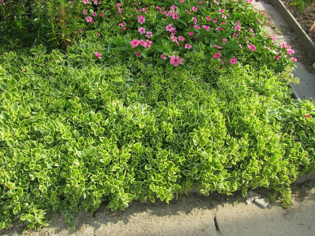 A List Of Drought Tolerant Or Xerophytic Plants For Xeriscaping In South Africa Plantinfo Everything Drought Tolerant Landscape Front Yard Plants Xeriscape