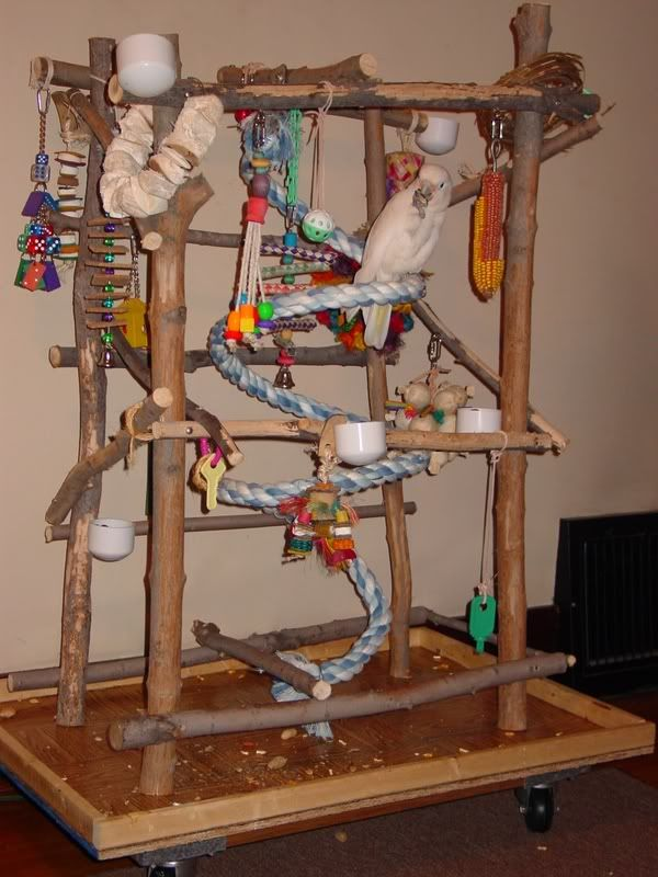 homemade play stand parrot