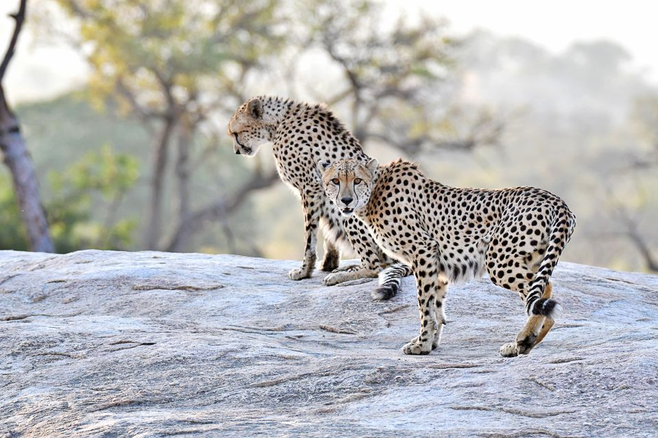 Cheetahs Of The Kruger National Park Are Not Easy To Find Kruger National Park National Parks Wildlife Photography