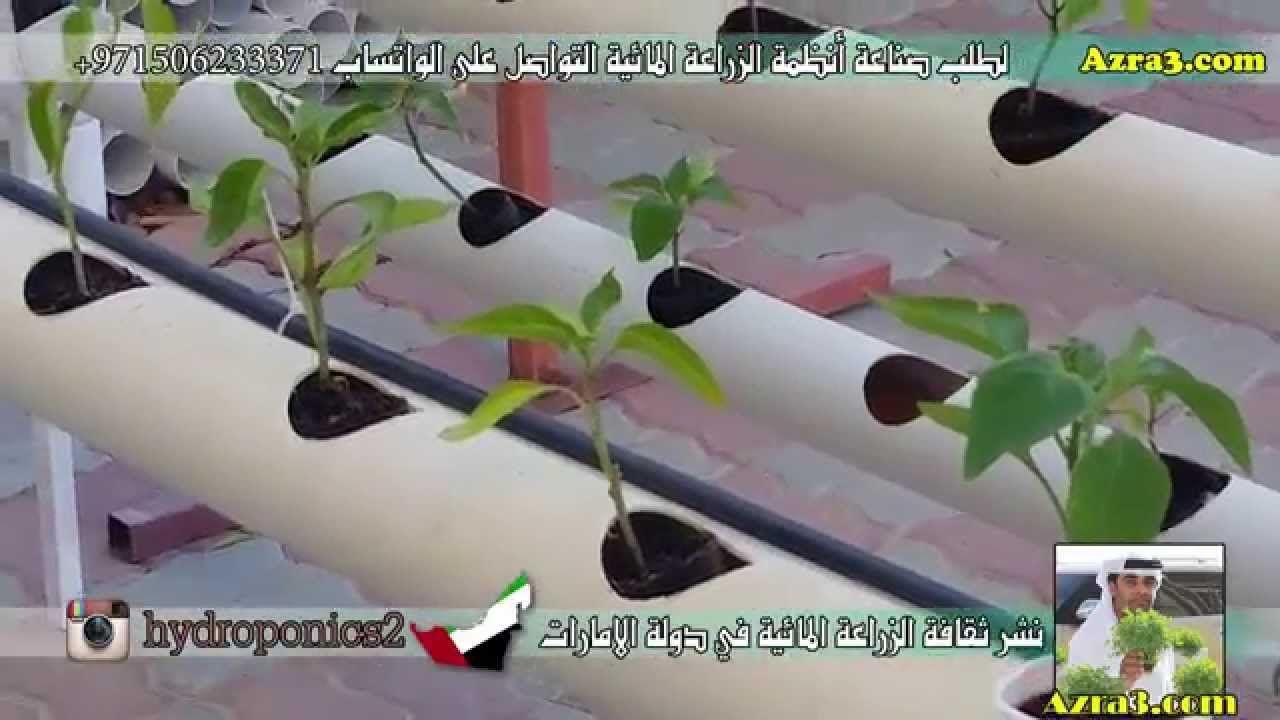 طريقة تثبيت الاكواب الورقية في نظام المثلث الخاص بالزراعة المائية Hydroponics Hair Straightener