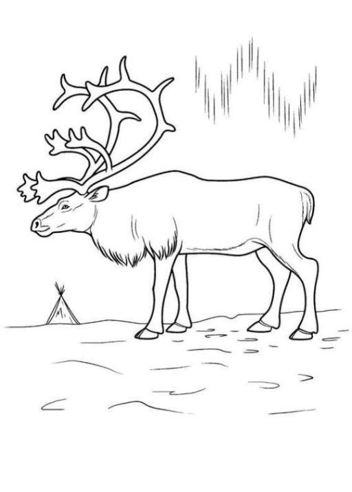 Ten Beste Malvorlage Hirsch Denkweise 2020 in 2021 Deer