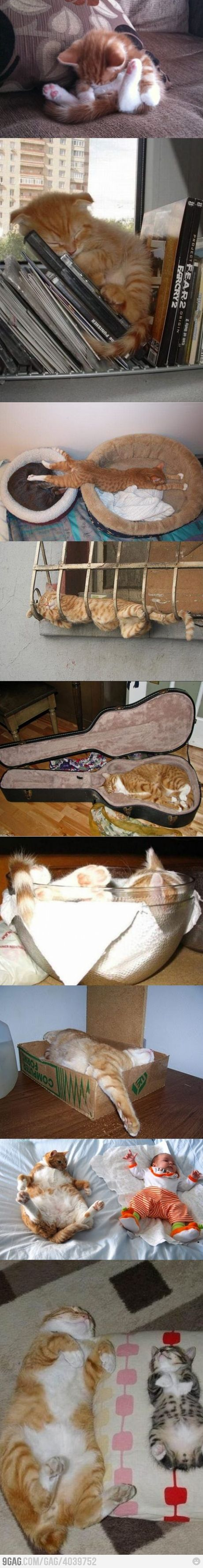 orange kitten.