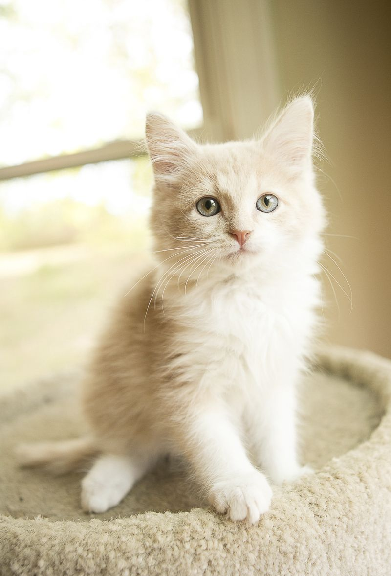 Caturday Fostering Kittens Daily Dog Tag Cat Photography Cats Kitten
