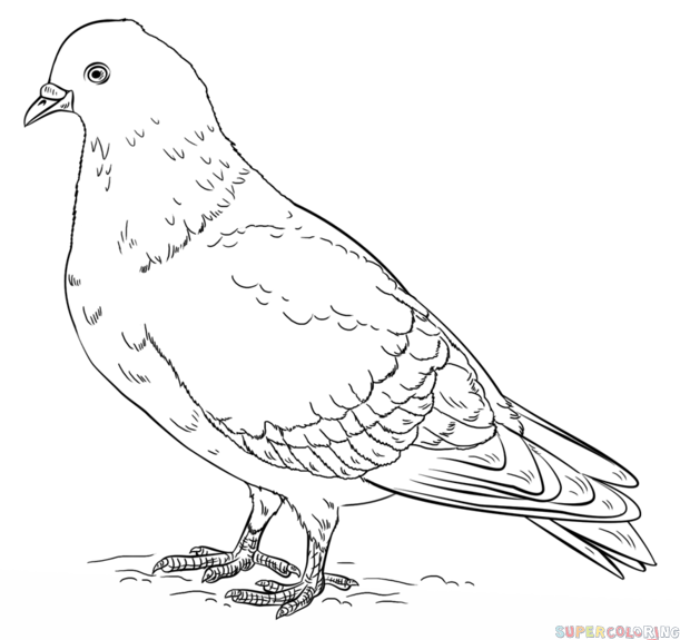 How to draw a pigeon step by step Drawing tutorials for kids and