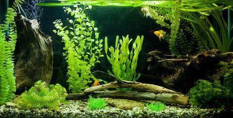 undefined | Freshwater aquarium, Aquarium, Aquarium design