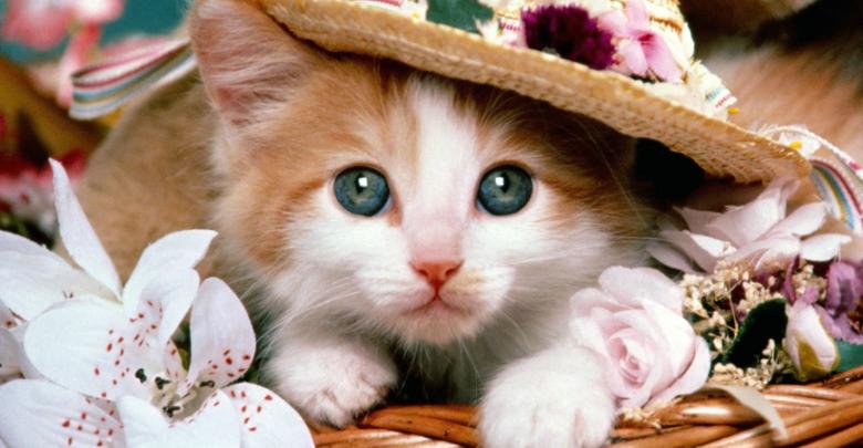 تفسير رؤية القطط في المنام للمتزوج والشاب الأعزب بتفسير ابن سيرين In 2020 Cute Cat Gif Cute Cat Cute Cats