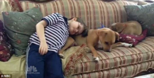 Brutally Abused Puppy Helps a Boy with Autism Find Happiness