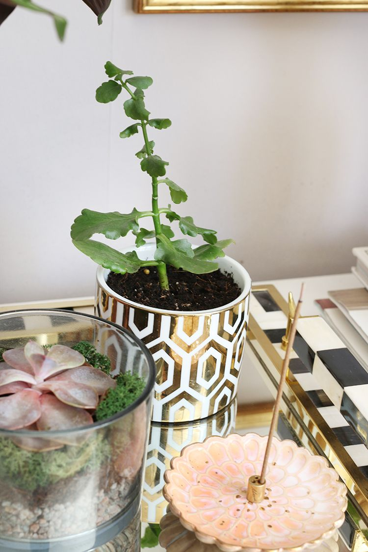 how to reuse candle jars for plants