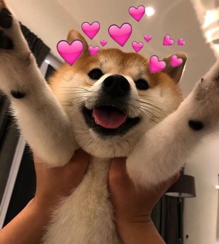 Perrito Lindo Cute Love Memes Cat Memes Cute Dogs
