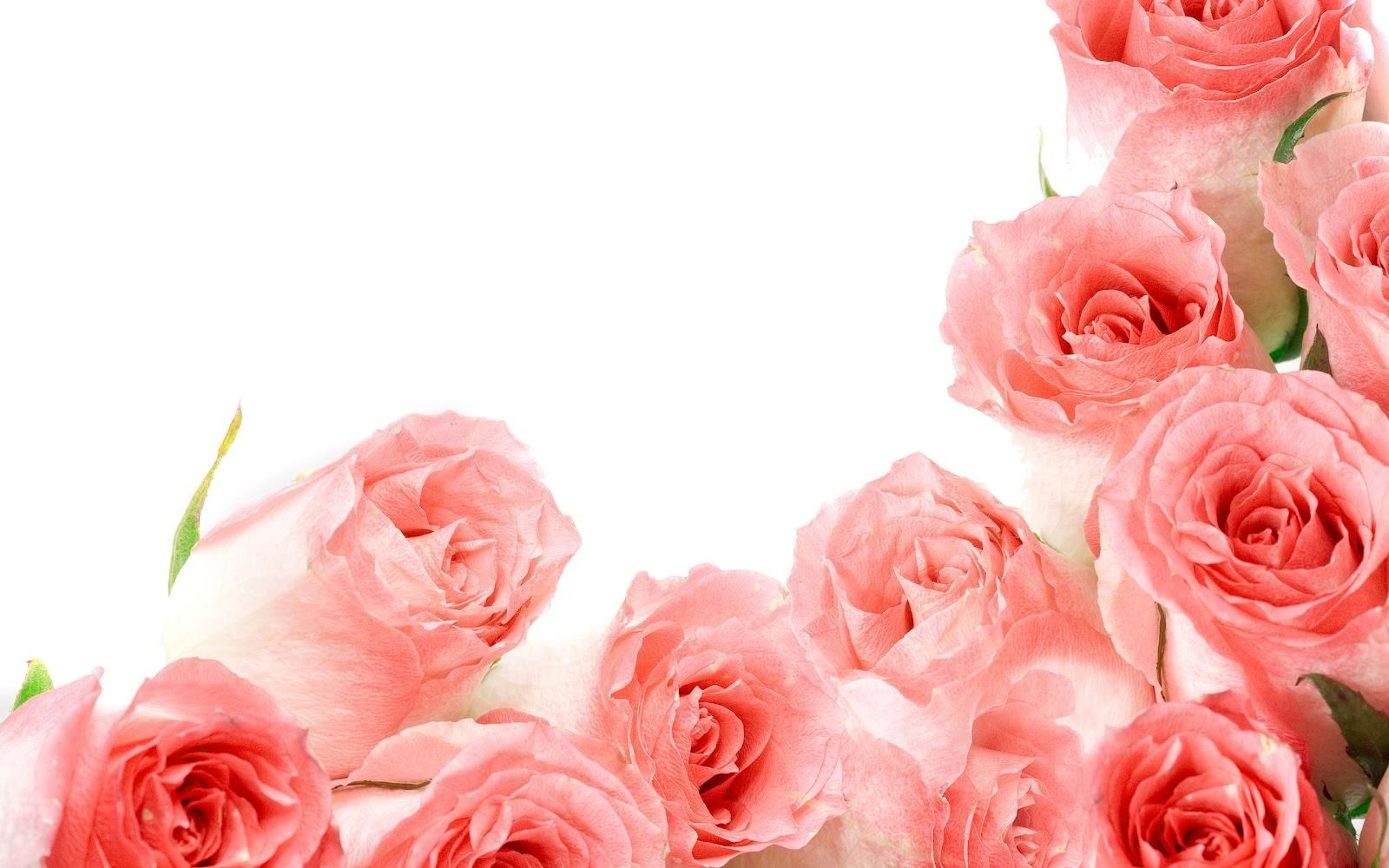 Pink Roses For You Hq Wallpaper I Dream Of Pink Roses Pinterest