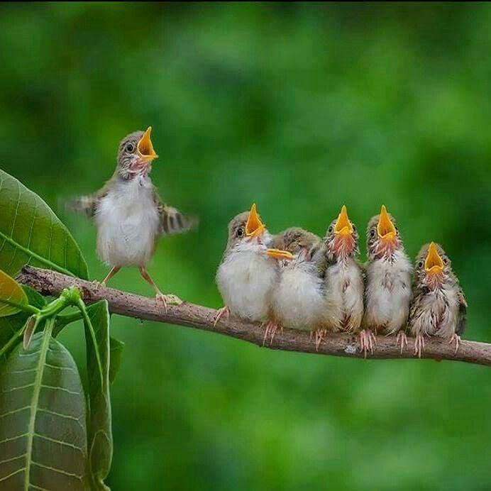 поздравление птицы поют воздуха, воды