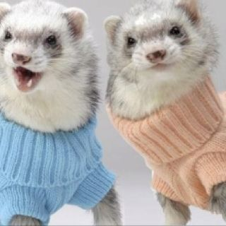 Ferrets in turtlenecks! Why do I find this so funny??
