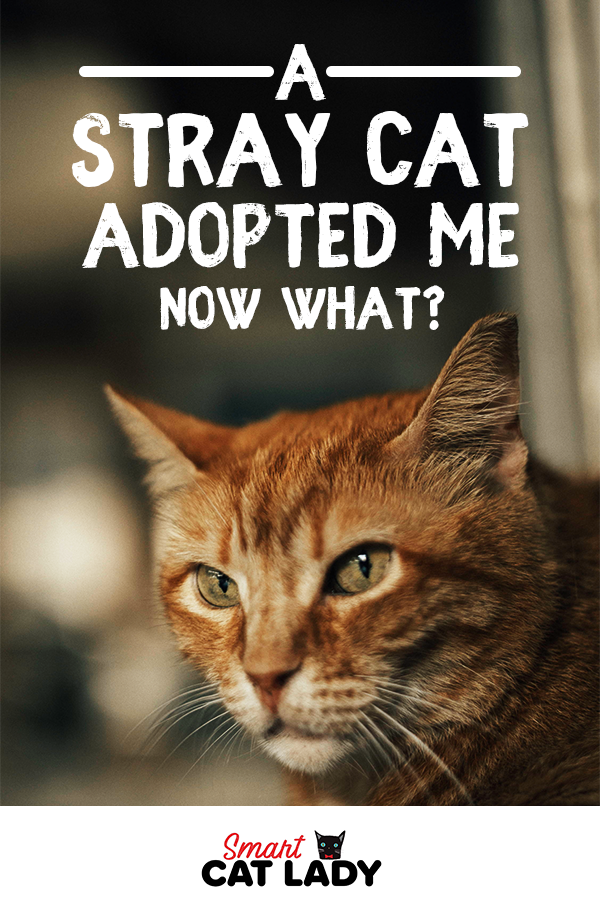 A Stray Cat has Adopted Me. . . Now What! Stray cat