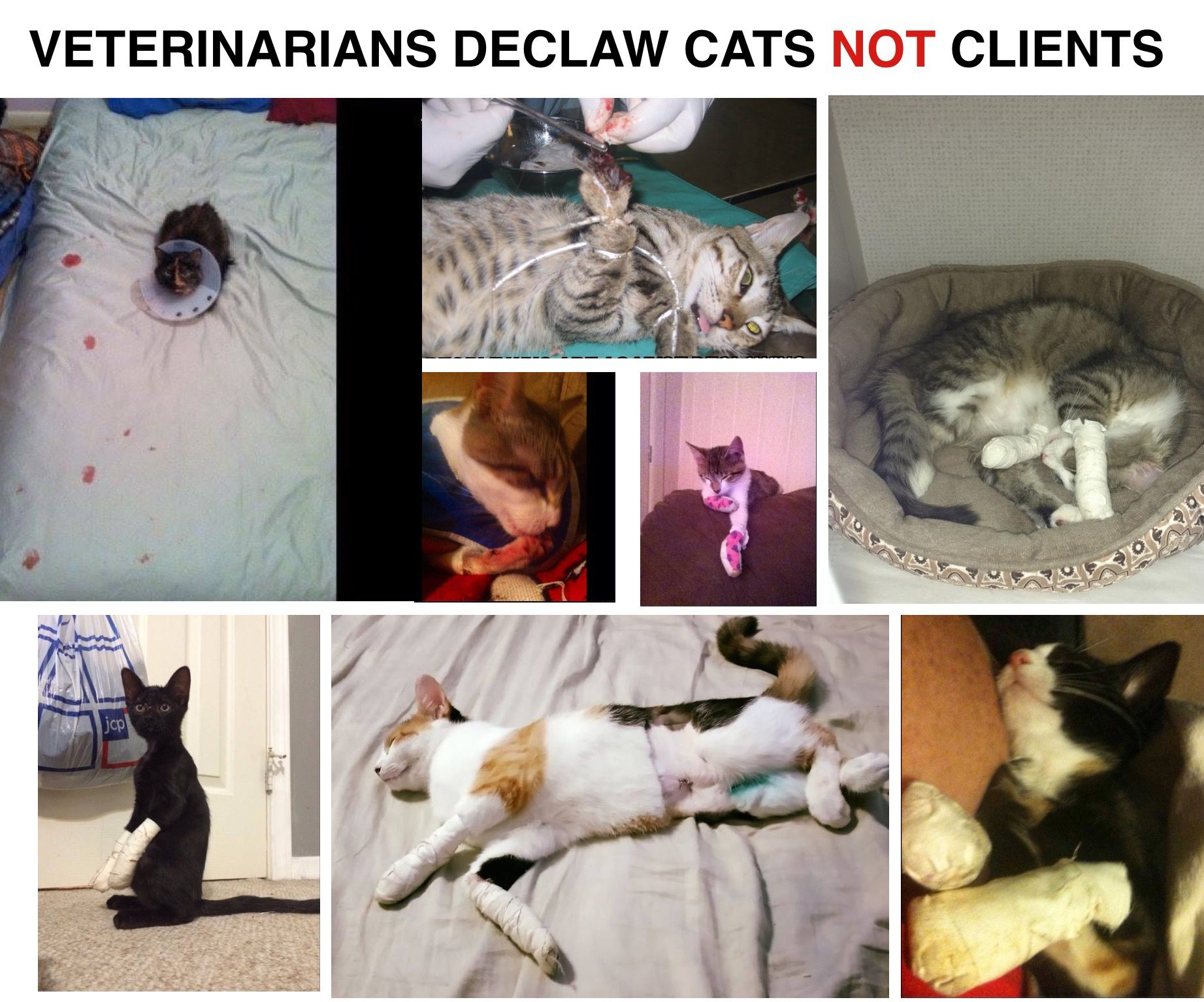 Avmavets Stop Lying Most Clients Do Not Know How Barbaric Declawing Is You Tell Them It Is A Simple Surgery So You Can Cas Vet Tech Vet School Vet Student