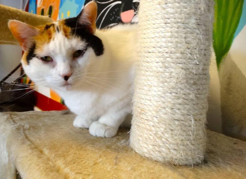 Adopt Jamie On Animal Welfare Society Animal Shelter Animals