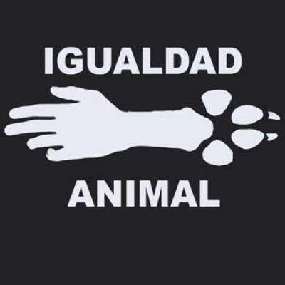No Al Maltrato Animal Mascotas Mascotas Frases Derechos De Los Animales