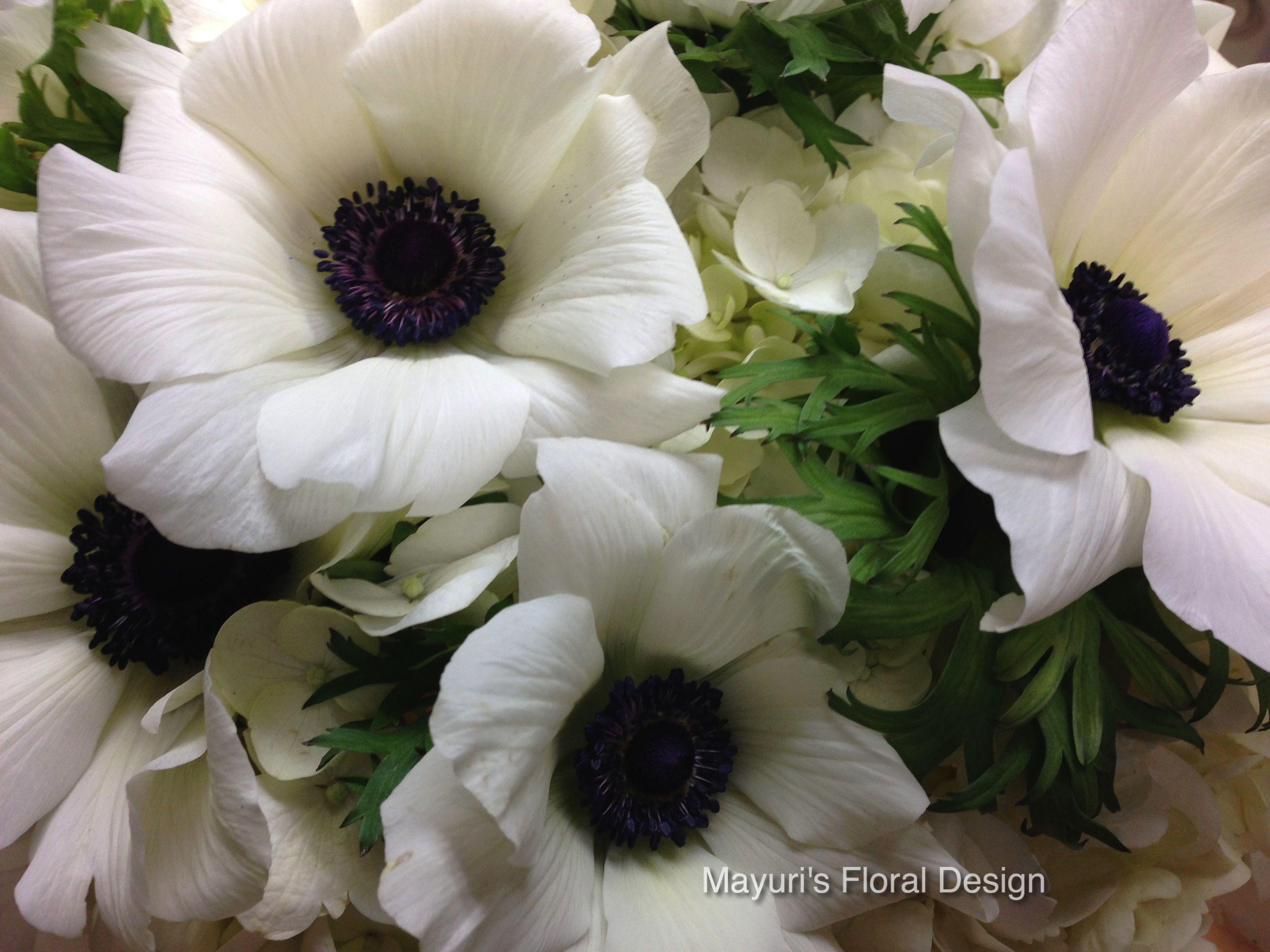 White Anemone With Dark Purple Center Great In Bouquets Flower
