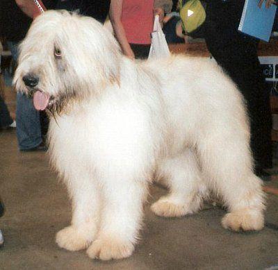 11 Dog Breeds You Never Knew Existed Dog Breeds Rare Dog Breeds Dogs